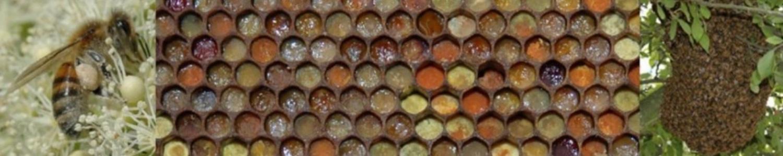 het houden van bijen
